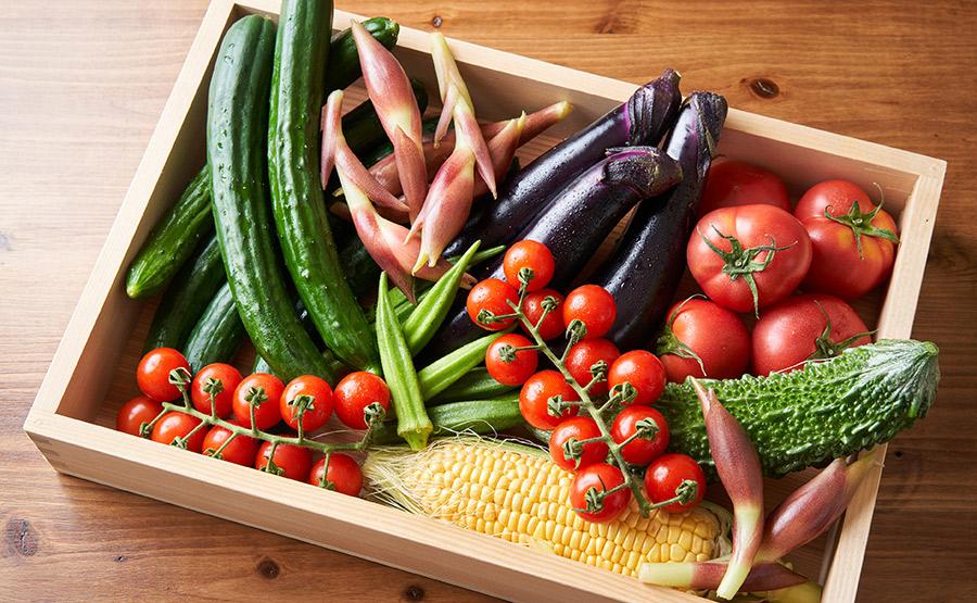 朝採れ野菜イメージ